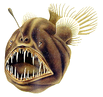 The abyss thinglink for What do angler fish eat